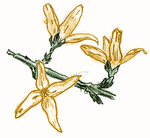 [D33] Forsythia Flowers by RetSamys