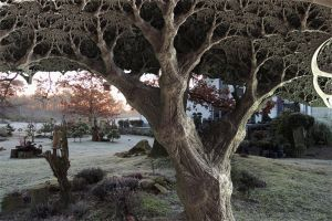 I spotted a fractal tree in my garden at sunrise by marijeberting