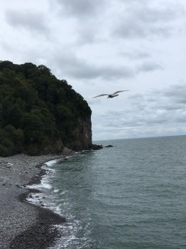 Pebble beach and Seagull by Tish-Underwood