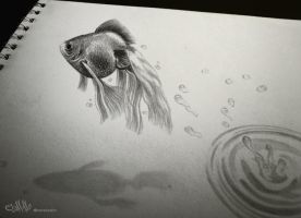Drawing fish 3D by alaadin
