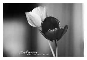 Black and White by Lelanie