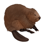 Light Brown Beaver Companion by TokoTime