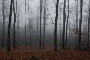 Foggy Forest 13 by sacral-stock