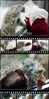 Snow Leopard Cub ID - Updated by Chaotica-I