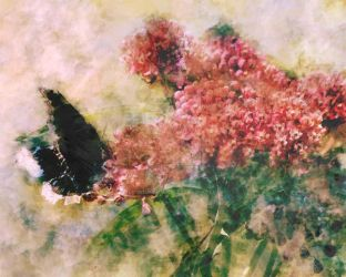 Mourning Butterfly by ArtistMeganNicole