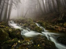 Whitewaters by borda