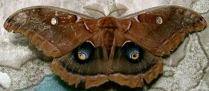 Moth 4 Stock by Penny-Stock