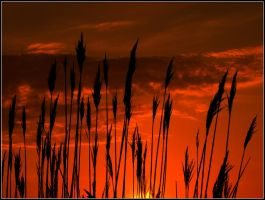 Reeds on Fire by Ryser915