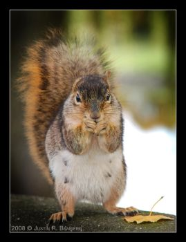 Bavarian Squirrel by jrbamberg