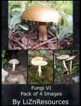Fungi Pack VI by LiZnReSources