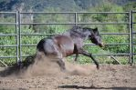 DWP HORSE STOCK 231 by DancesWithPonies