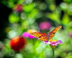 Butterfly in the Morning by existentialdefiance