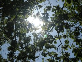 Light through leaves by uguardian