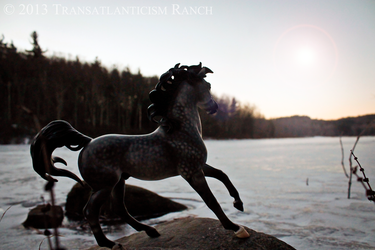 Icy Morning by TR-Ranch