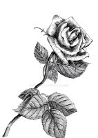 Rose by artist-Sll