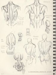 Sketchbook: Bridgman Anatomy by Zeleznik