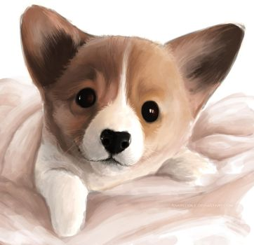 Corgi pup by Ankredible