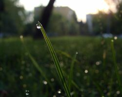 morning dew by kicsianna