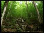 In The Green Forest. by Sparkle-Photography