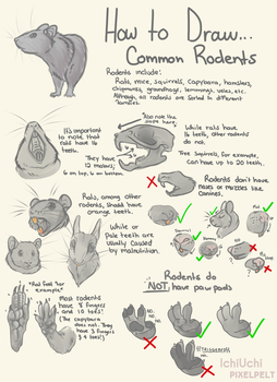 How To Draw Common Rodents! by PixelSprout