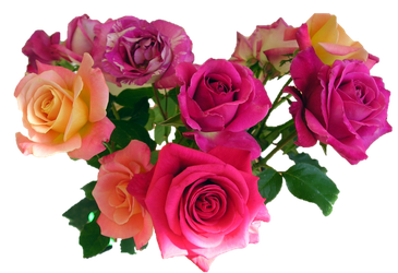bouquet mixed roses by wasshere