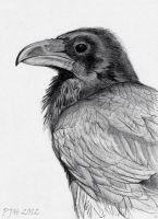 Raven by PhilipHarvey