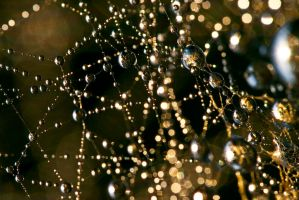 Spider web by Dtomi84