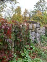 Wall of Ivy by TheRedStranger