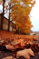Autumn Leaves by Eroha