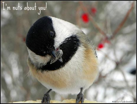 Nuts about you by Lou-in-Canada