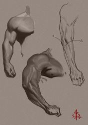 Some Arm Studies by FUNKYMONKEY1945