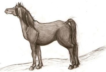 Charcoal Horse by Goldenhoof