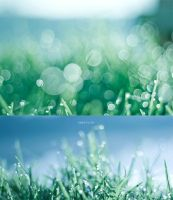 Dew by andotsiry