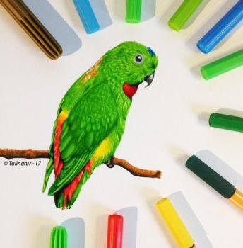 Blue-crowned hanging parrot (Loriculus galgulus) by Tulinatur