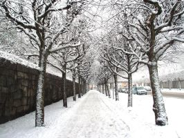 Winter Path by redx3doggy