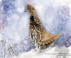 Alert Ruffed Grouse by Nambroth