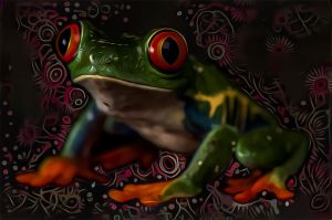 Frog  by DonkehSalad23