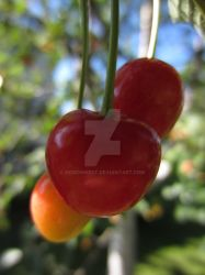 Cherry by KeironWest
