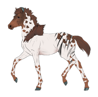 N2841 Padro Foal Design by casinuba
