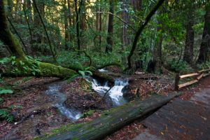 In Muir Woods 8 by Datasmurf