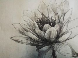 Flower Practice 1 by hxpt