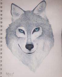 Grey wolf by CaptainBeth