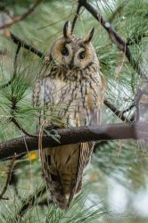 Owl in the tree by albuemil