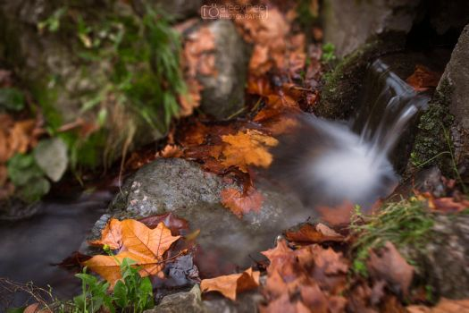 Autumn Water flow with leafs by aleexdee