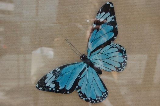 the turquoise butterfly by notisia