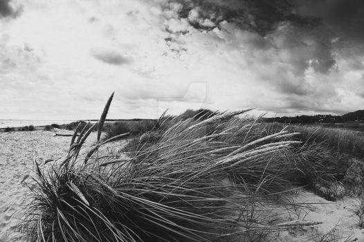 Beach grass (BW) by MbOscarsson