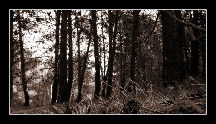 Withdrawn In Forest by the-disposessed