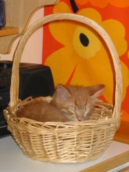 Otto-kissa in a basket by VanDerPhunck