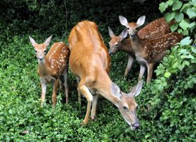Bambi and family by aglover0007