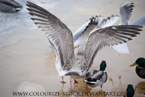Bird Stock 15 by Colourize-Stock